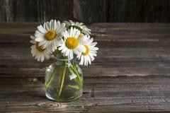 庭院耕种了在一个玻璃瓶的春黄菊花在简单的黑暗的木背景 选择聚焦 在水平 库存照片