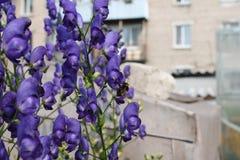 庭院花在夏天 免版税库存图片