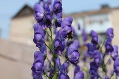庭院花在夏天 图库摄影