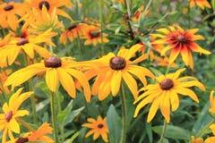 庭院花在夏天 免版税库存照片