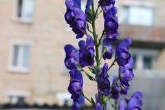 庭院花在夏天 库存照片