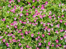 庭院花,雏菊花的领域 免版税库存照片