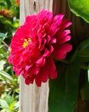 庭院花 库存图片