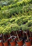 庭院苗圃植物 免版税库存图片