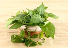 庭院茄属植物叶子 库存图片