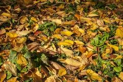 庭院草坪在秋天 库存照片