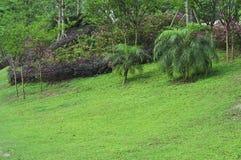 庭院草坪 库存图片