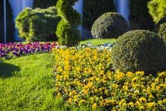 庭院草坪 免版税库存图片