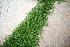 庭院草绿色路径石头 库存照片