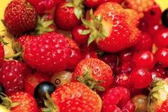 庭院莓果 免版税图库摄影