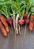 庭院萝卜,红萝卜,与土壤的daikon在木背景 免版税库存照片