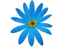 庭院蓝色花,白色隔绝了与裁减路线的背景 特写镜头 免版税库存照片