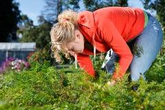庭院蔬菜工作 免版税库存图片