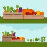 庭院蔬菜 有机和健康食物 新鲜蔬菜 向量例证