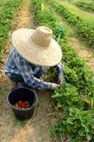 庭院蔬菜 图库摄影