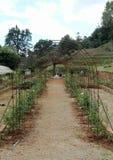 庭院走道在皇家玫瑰花园竞技场 图库摄影