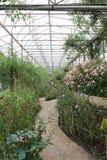 庭院走道在皇家玫瑰花园竞技场 免版税库存照片