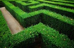 庭院迷宫 库存照片
