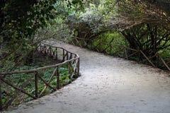 庭院道路穿过树篱 被编织的分支绿色曲拱  豪华的绿色庭院 库存图片