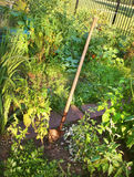 庭院铁锹在庭院里 图库摄影