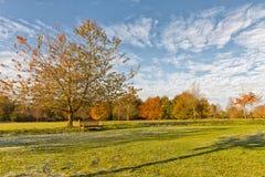 庭院长凳在一棵树下,在秋天公园风景 免版税库存照片