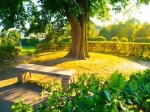 庭院长凳在树下在夏时公园 图库摄影
