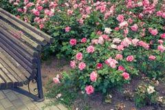 庭院长凳的玫瑰花坛和片段 免版税图库摄影