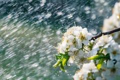 庭院雨春天 库存图片