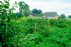 庭院风景在村庄 库存照片