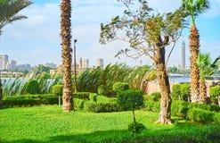 庭院,开罗,埃及的豪华的绿叶 免版税库存图片