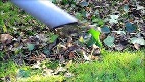 庭院,秋叶配置以叶子真空 影视素材
