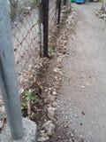 庭院,篱芭线 免版税库存图片