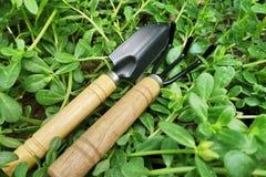 庭院从事园艺的春天工具 免版税库存图片