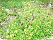 庭院贞女自然秀丽视图  库存图片