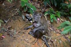 庭院猴子 图库摄影