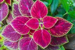 庭院-植物花 免版税库存图片