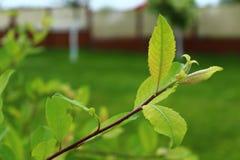 庭院绿色 库存照片