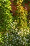 庭院 库存照片