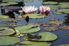 水庭院 库存图片