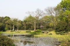 庭院 图库摄影