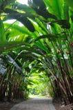 庭院heliconia路径森林 免版税库存照片