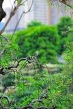庭院lian南 免版税库存照片
