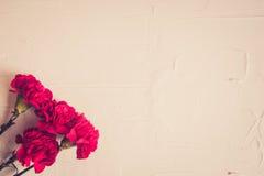 康乃馨花和乔治丝带特写镜头在黑暗的背景 9日历可以红色胜利 周年纪念70年 免版税库存照片