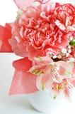 康乃馨花在白色背景中 库存图片