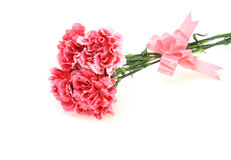 康乃馨花束与丝带的 免版税库存图片