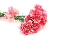 康乃馨花束与丝带的 库存照片
