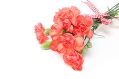 康乃馨花束与丝带的 库存图片