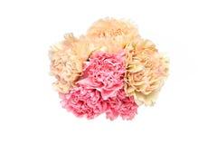 康乃馨花束在白色背景中 库存图片