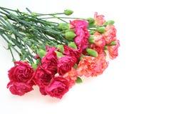 康乃馨花束 图库摄影