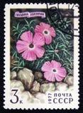 康乃馨,桃红色或者甜威廉-石竹repens,大约1977年 库存图片